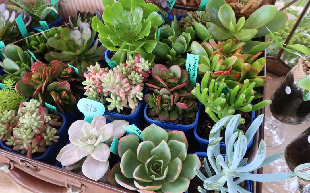 If you're looking for succulents, we've got you covered