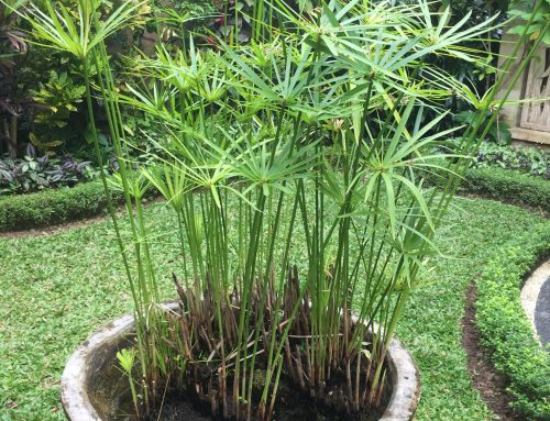 The Best Plants For A Shady Sydney Garden – Part 3