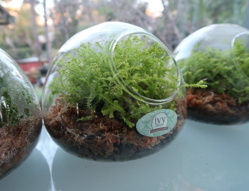 How To Care For Your Terrarium